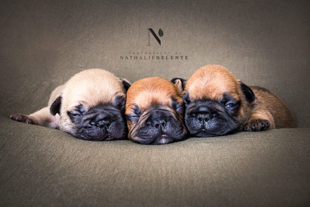 pet photography chelmsford