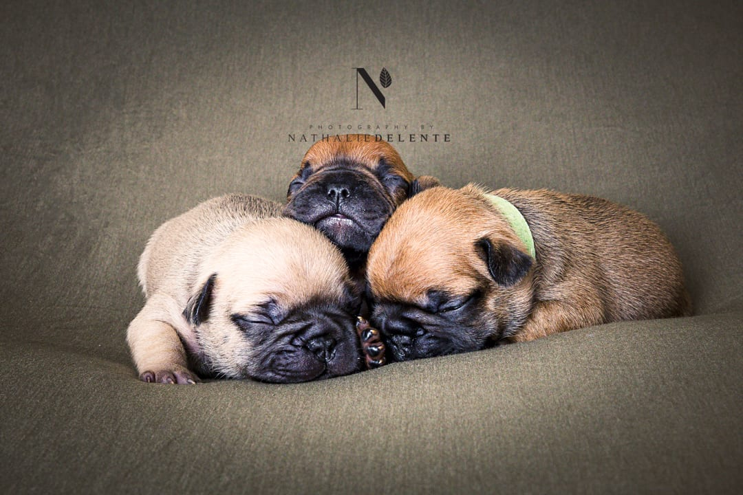 pet photography Chelmsford Essex