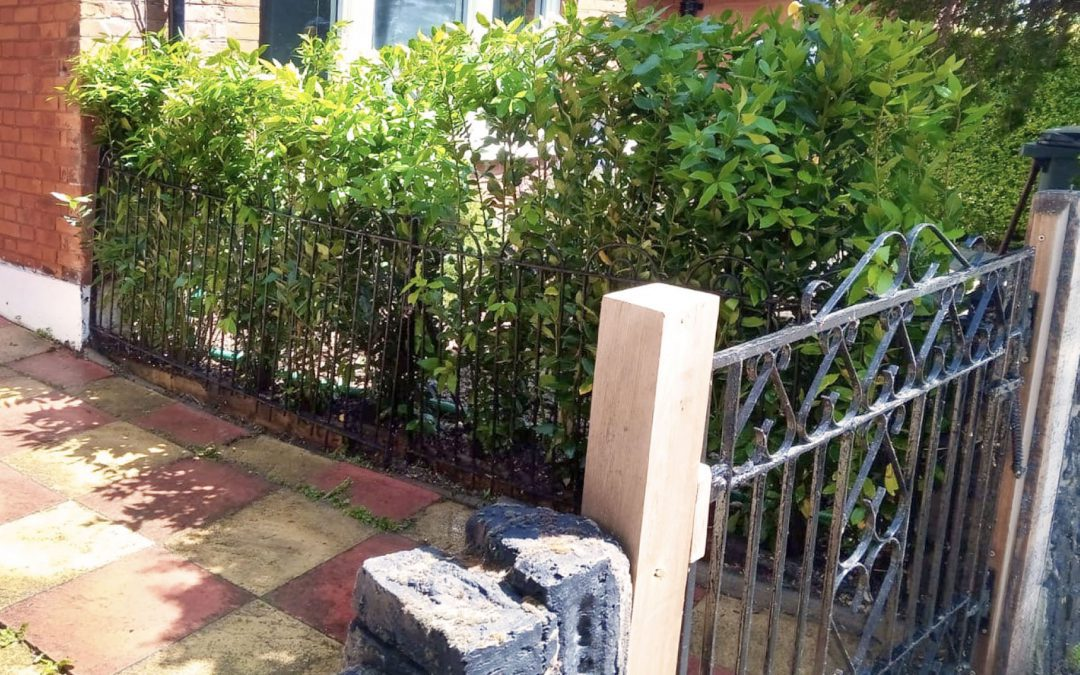 Protect your buxus hedge